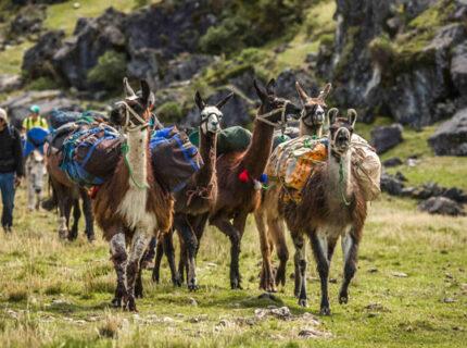 Llama Packing Trek to Ausangate, Rainbow Mountain & Machu Picchu 7D/6N
